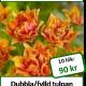 Willem van Oranje, 10 tulpanlökar