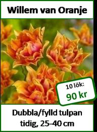 Willem van Oranje, 10 tulpanlökar -
