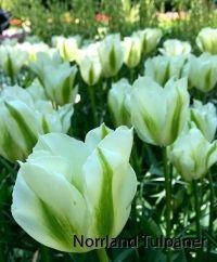 Spring-green 2