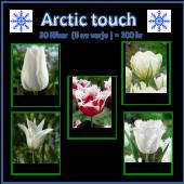 Arctic touch, 30 lökar