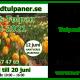 Presentkort: Norrlands Tulpan Festival 2021