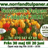 Presentkort: Norrlands Tulpan Trädgård 2021