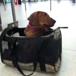Lee2@airport