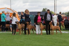 SKK Köping Int. 2015-07-18 domare: Davern Pluis KENNEL MOHAGET'S uppfkl 1 HP Very similar in outline and headpieces and way of moving. Lovely outlines on the move.