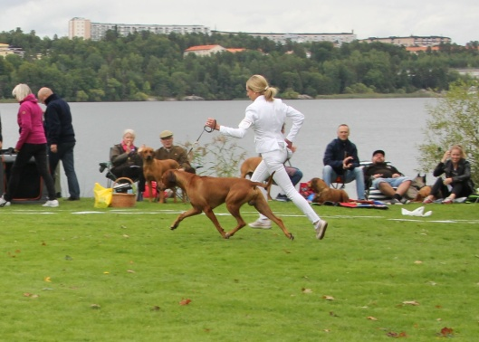 C.I.B NORDUCh SEVCh Mohaget's Mister Masai 5½y