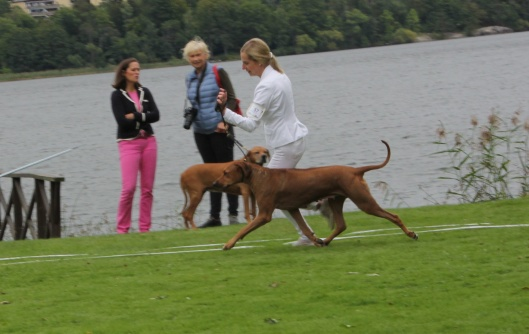 SEVCh Mohaget's Miss Mandy 5½y