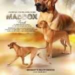 Maddox AD
