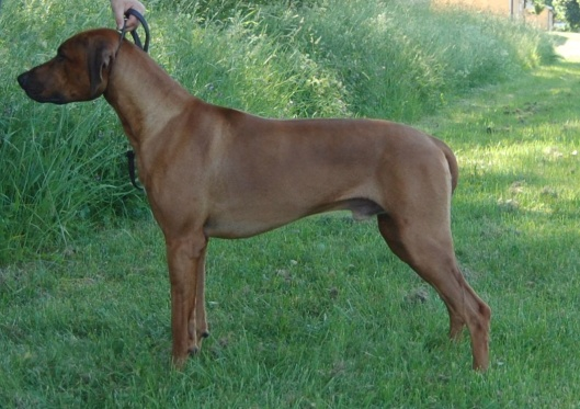 SEVCh Giant Flair´s Legend of Muna Ya Kusini 14½m