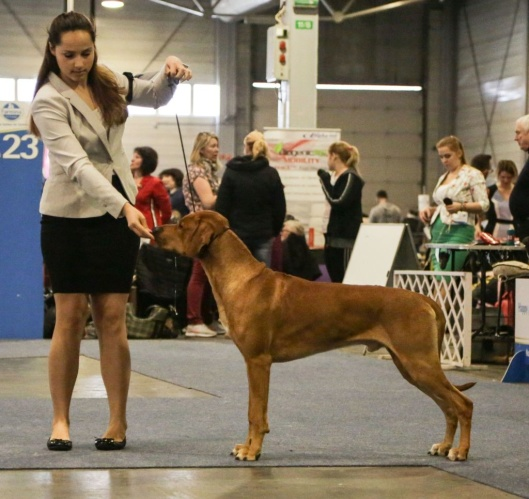 JCh. Mohaget´s Major Maddox - BOB with CACIB in Budapest