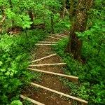 Naturreservat. Påvadalen är ett grönskande eldorado om våren. FOTO: MICAEL GOTH