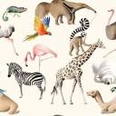 Zoo PG6