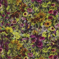 Indian-Sunflower-Graphite-PG8