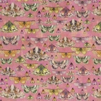 Issoria-Velvet-Rose-PG11