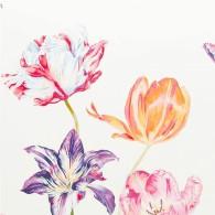 Tulipomania-PG7