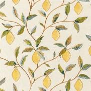 Lemon-Tree-EMB-PG11