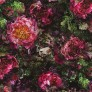 Romaunt-Rose-Fuchsia-PG7
