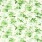 Hedera Grön PG6 M