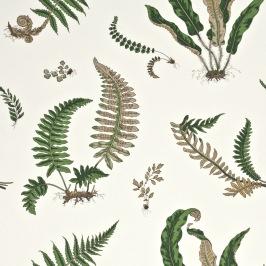 Ferns Grön
