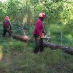 Skogen motorsåg 3