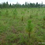 Små träd