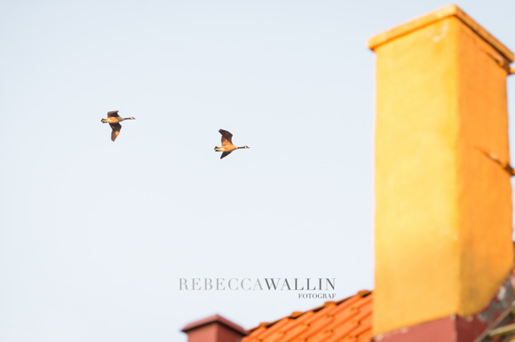 Fotograf Rebecca Wallin