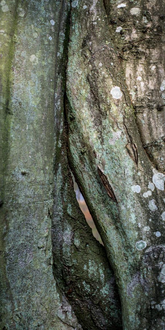 Träd som fascinerar. Rebecca Wallin