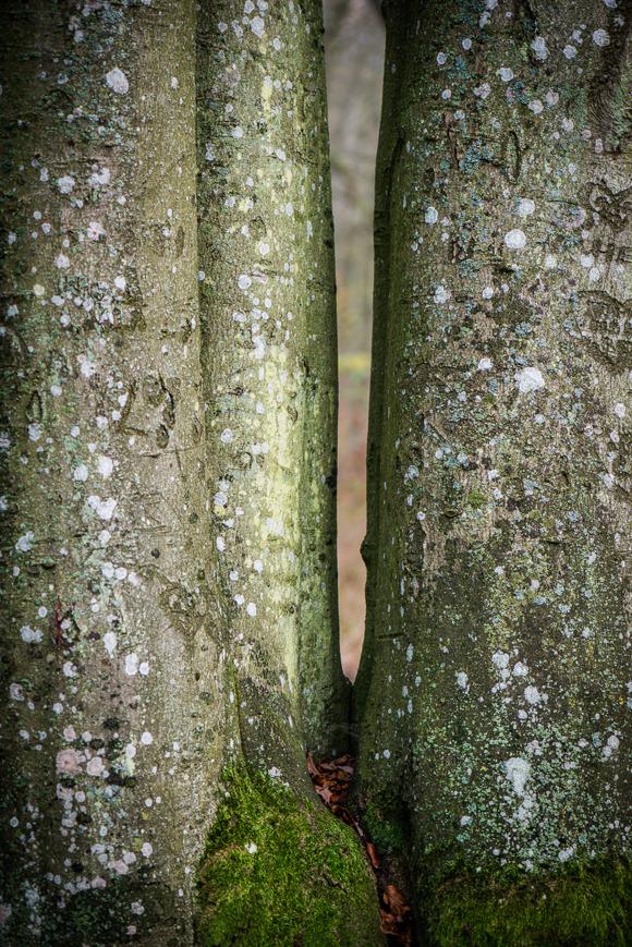 Träd av Rebecca Wallin