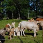 Betande djur bredvid huset