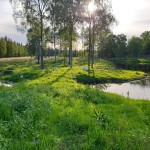 Våtmark_3
