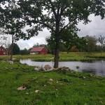 Våtmark_5