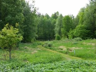 Dammen på Torpalund