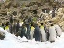 Pingvinariet Loro Park