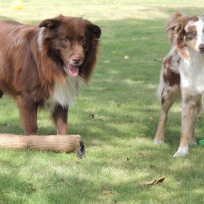Fargo och Ayla