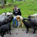 Atlas hälsar på hos fåren