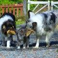 Kessie, katten Sune och Minta