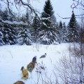 Skogpromenad början på året -10