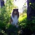 """KORAD Ottey's Golden Bear  """"Nalle"""""""