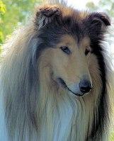 KORAD  Ottey's Goldenbear