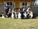 Valpköpare och deras hundar på MH
