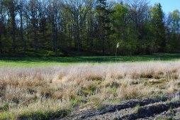 Tomt N, här finns både morgonsol och skugga under stora mäktiga ekar i skogsdungen på tomten.