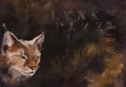 Lynx Lynx (SÅLD)