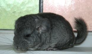 Elmer 1