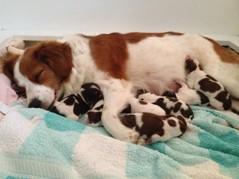 Zally vilar ut efter förlossningen