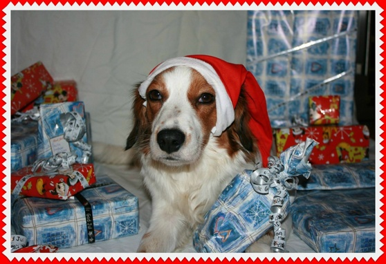 Zelda önskar alla en God Jul!