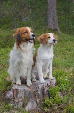 Bajas och Kompis Foto: O.Josephsen