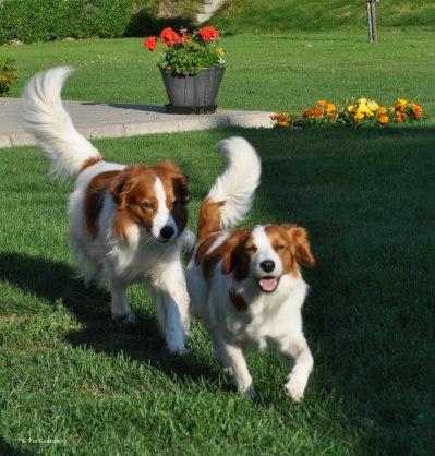 Jacko och Zally