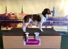 Lettisk champion och BIM Riga 2018-03-17