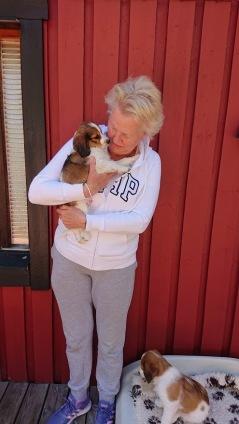 Ludde for med Nina till Hälsingeskogarna och familjens övriga tre hundar
