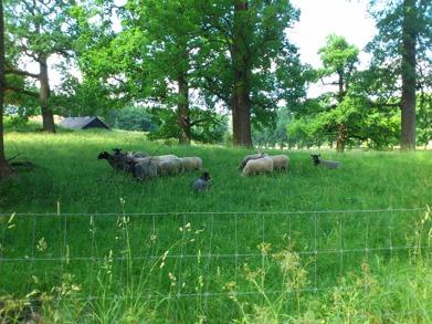 Väntar på våren och nytt färskt gräs......