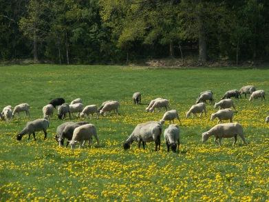 Snart får vi äta gräs igen....